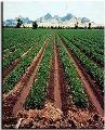 فروش زمین با موقعیت تجاری