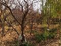 11000 متر باغ میوه در شهریار کد : 1040