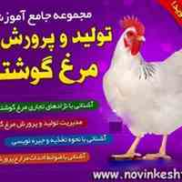 آموزش مرغداری و پرورش مرغ گوشتی | کتاب بهمراه سی دی