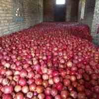 فروش ویژه انار عمده و جزئی ارسال به سراسر کشور