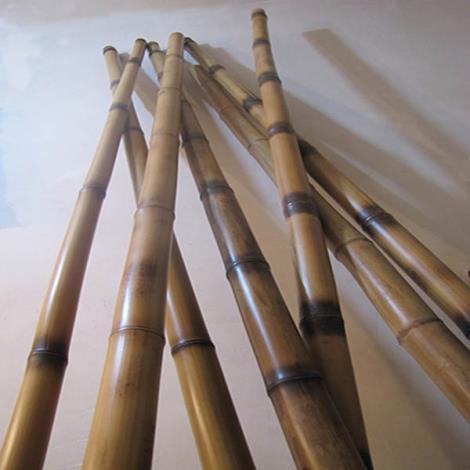 قیمت چوب بامبو