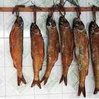 طرح توجیهی تولید ماهی دودی و ماهی شور