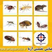 سمپاشی تضمینی آریا، سمپاشی محله یافت اباد