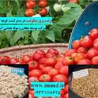فروش ورمیکولیت و پرلیت در بستر گوجه گیلاسی