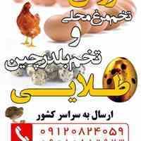 محسن مهر خواه