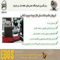 پرورش غاز با تخم نطفه دار تضمینی
