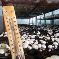 اجاره سالنهای تولید قارچ  (فرصت استثنایی آخر سال)