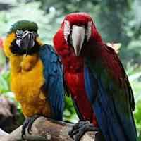 مکمل آب تنی پرنده و طوطی سان