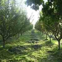فروش 1050 متر باغچه در ابراهیم آباد شهریار