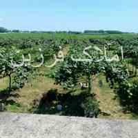 فروش باغ میوه در چمخاله