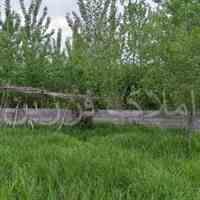 فروش زمین 1000متری با کاربری باغی در لاهیجان
