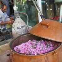 فروش عمده گلاب اعلا کاشان