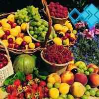 بازرگانی فودوکو (صادرات انواع میوه جات )