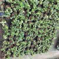فروش گل و گیاه باغی و باغچه ای آپارتمانی