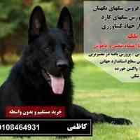 فروش انواع سگ نگهبان و سگ پلیس 09108464931