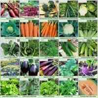 فروش انواع بذر صیفی جات ، سبزیجات و گلهای زینتی