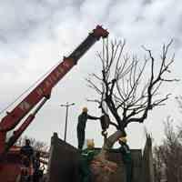 جابجایی انواع درختان تخصص ماست