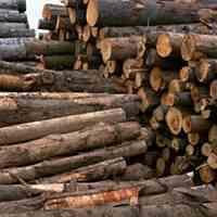 خریدوفروش چوب:چوب پالتی،ضایعاتی،ذغالی،تخته