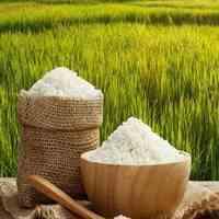 فروش برنج شمال درجه یک