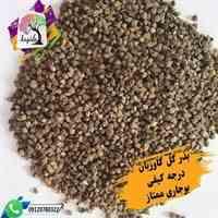 فروش مستقیم بذر گل گاوزبان ایرانی