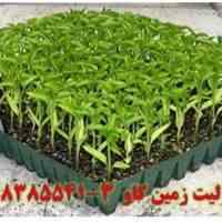مزیت های استفاده از پرلیت پرورش بذر و قلمه زنی Perlite