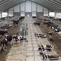 فروش گاوداری شیری 5 هکتاری(فروش فوری)