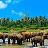 تور سریلانکا زمستان ۹۹