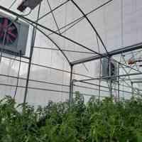 سیستم سرمایشی گلخانه ای سرماسان