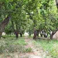 500 متر باغچه ی مشجر بسیار زیبا در شهریار