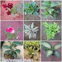 فروش انواع گل و گیاه آپارتمانی و باغچه ای