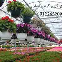 تولید کننده گل و گیاه | تولید کننده گل و گیاه و نهال ها
